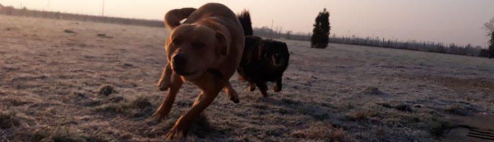 Rifugio fidoamico Onlus cani in corsa