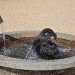 Zumpa gioca in vasca