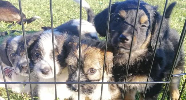 Cuccioli in Fidoamico